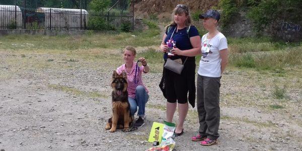 В Гурзуфе прошла первая выставка собак «Гурзуфский дебют».